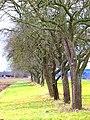 Orchard - panoramio (6).jpg