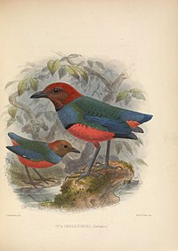 Ornithological miscellany (Plate) (5982042736).jpg