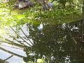 Orto botanico di Napoli 49.jpg