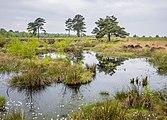 Ostercappeln - Venne - Venner Moor 11.jpg