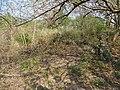 Overgrown Ruins of Original Settlement under Cortes - Villa Rica - Veracruz - Mexico - 01 (15872259428).jpg