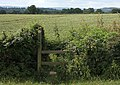 Overgrown stile, Forthampton - geograph.org.uk - 1404577.jpg