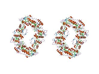Cytochrome c family - sulfate respiration in desulfovibrio vulgaris hildenborough: structure of the 16-heme cytochrome c hmca at 2.5 a resolution and a view of its role in transmembrane electron transfer