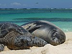 PMNM - Green Sea Turtle And Monk Seal (30668756064).jpg