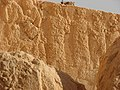 Palmyra (2599938671).jpg