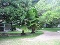 Paracuru brasile ceara - panoramio - brunobarbato (55).jpg