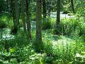 Parc-nature du Bois-de-l-ile-Bizard 28.jpg
