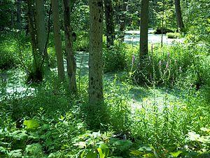 Bois-de-l'Île-Bizard Nature Park - Marshland in the park