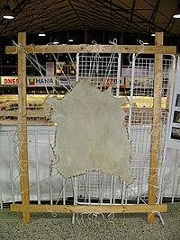 Τύπος περγαμηνής τής Β. Ευρώπης παρασκευασμένης από αιγόδερμα στο στάδιο κατά το οποίο τεντώνεται σε ξύλινο πλαίσιο