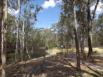 Chandler, Queensland - An area of bushland in Chandler, consisting of eucalyptus trees and a small lake, close to the Sleeman Centre.