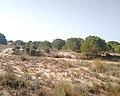 Parque de Doñana 20210610 21.jpg