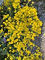 Pastels jaunes fleurs.jpg