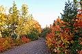 Path to Mary Ann Falls (15348079617).jpg