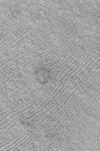 Vastitas Borealis - Image: Patterned ground in Mare Boreum