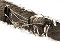 Peasant ploughing with two horses, 1977 springs, Szatmar county Hungary.jpg