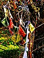 Pedro Meier Land Art »Wind-Skulptur« mit Tibet Gebetsfahnen 2017, Skulpturenpark, Atelier Gerhard Meier-Weg Niederbipp. Foto © Pedro Meier Multimedia Artist.jpg