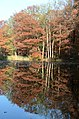 Perfect reflections in the pond at Hoge erf Schaarsbergen - panoramio.jpg