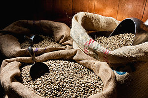 Coffee production in Peru - Terra Nera coffee beans.