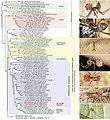 Pholcidae (10.3897-zookeys.789.22781) Figure 3.jpg