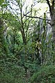 Phosphatières du Cloup d'Aural - 20140925.jpg