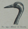 Picture Natural History - No 143 - Head of Crane.png