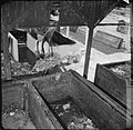 Pig Food- Women's Voluntary Service Collects Salvaged Kitchen Waste, East Barnet, Hertfordshire, England, 1943 D14257.jpg
