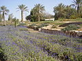 PikiWiki Israel 18691 Herbs Garden in Kibbutz Neot Semadar.JPG