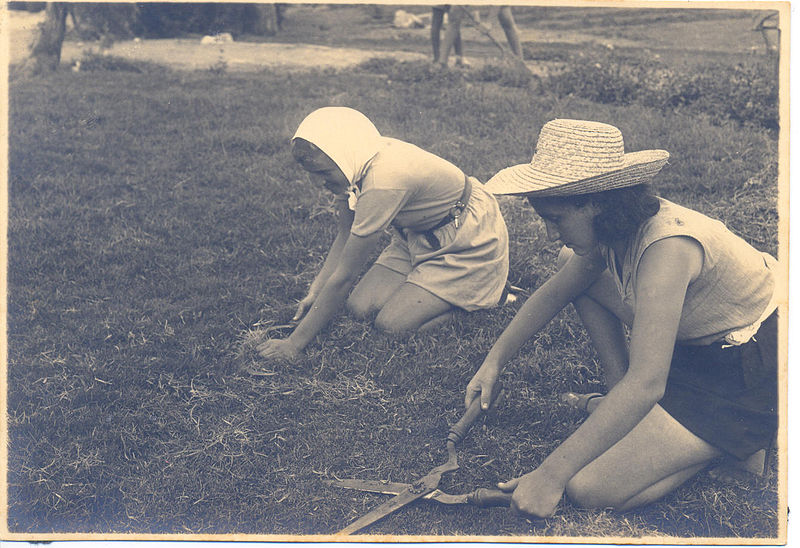 גיזום דשא