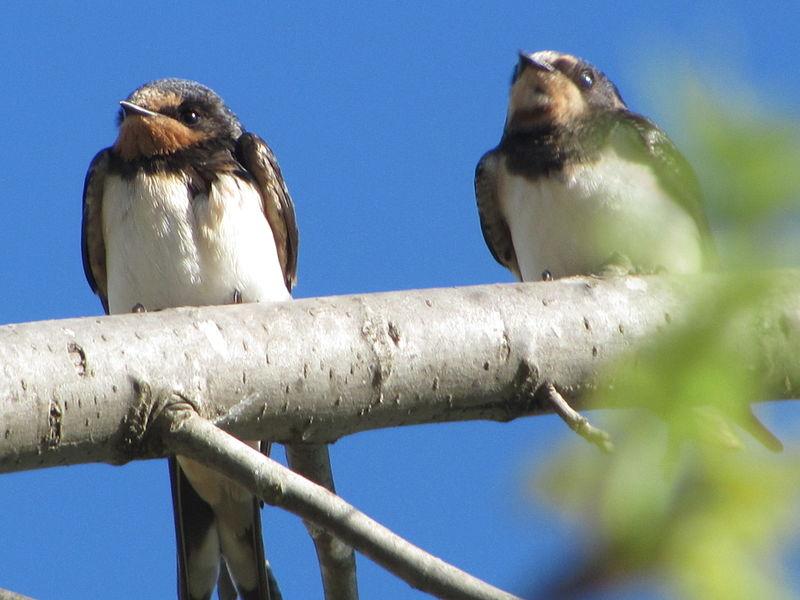 הזוג במרומי העץ