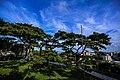 Pine Garden (Pinus Luchuensis), Hualien City, Hualien County (Taiwan) (ID UA09602000650).jpg