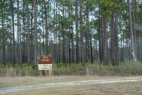 Pine Log State Forest Florida from SR79.jpg