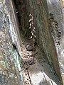 Planta escondida entre rochas.jpg