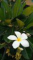 Plantas con flores blancas que realiza fotosintesis. jpg.jpg
