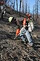 Planters working on the San Bernadino NF (3821494270).jpg