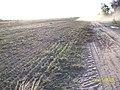 Plantio Direto Fazendas da Região - Loreto - Ma - panoramio.jpg
