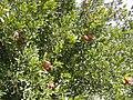 Plants Georgia.jpg