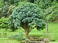 Plants at Queen Sirikit Botanic Garden - Chiang Mai 2013 2535.jpg