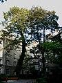 Podwórze kamienicy przy ul. Wawelskiej 60 w Warszawie.jpg