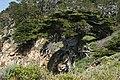 Point Lobos. 2010 04 17 - panoramio - Vadim Manuylov (7).jpg