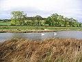 Pond at Whitrig Bog - geograph.org.uk - 264166.jpg