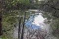 Pond near Meshkovo 01.jpg