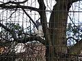 Portsmouth Victoria Park albino squirrel.JPG