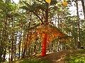 Positivus 14' Pine - panoramio.jpg