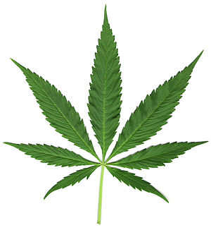 Leaflet (botany) - Palmately compound leaf of hemp
