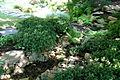 Pražská botanická zahrada, japonská zahrada, Nádvorní 134, Praha - Troja 15.JPG