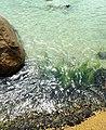 Praia de Cima - Pinheira - panoramio (4).jpg
