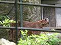 Puma beauval 02.JPG