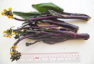 Choy sum - Image: Purple Choi Sum stalks besides ruler