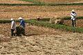 Quang Ngai farmers.jpg