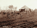 Queensland State Archives 2396 Sweet potatoes sugar bananas farmhouse and people on horseback at Simpsons farm Maleny Blackall Range c 1899.png